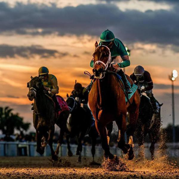 Best Horse Racing Tracks in the World
